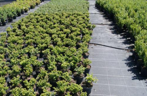 0,65 €//m²    Bodengewebe Gartenvlies Unkrautvlies Bodenschutzgewebe Top Preis