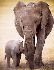 "Eurographics Puzzle (Mini) 100 Pc - Elephant & Baby """"NEW"""""
