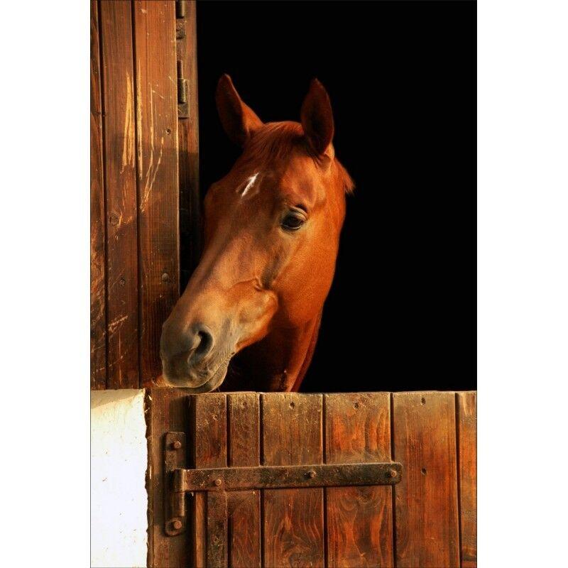 Wandaufkleber Deko   Pferd in Seinem Box Kopf Links 1359