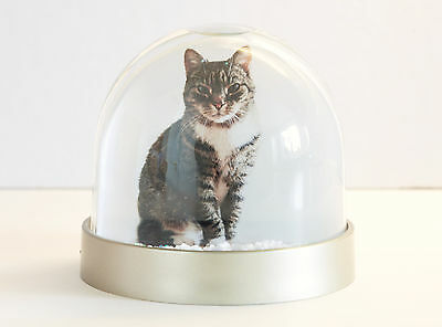 Cat Snow Globe, Tabby Cat 2