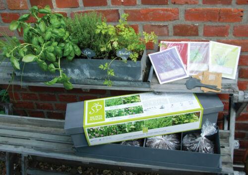 Jardinière en zinc et  4 herbes aromatiques