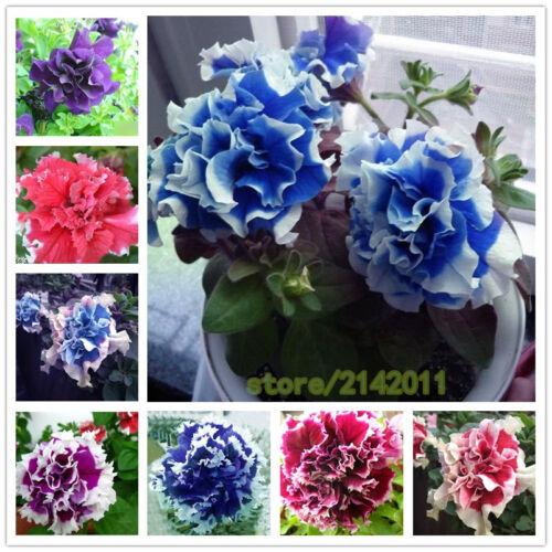 100 pcs//bag petunia seeds,flowers petunia,beautiful bonsai flower seed