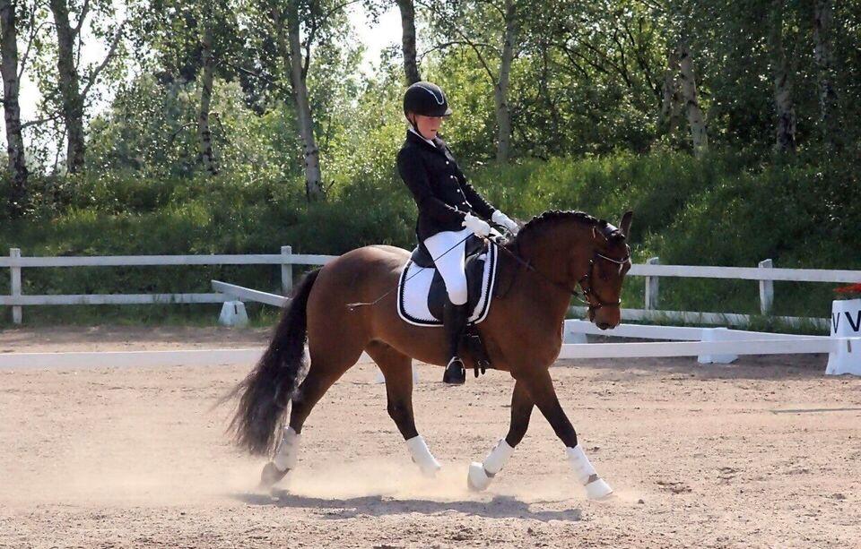 Dansk Sports Pony (DSP), vallak, 9 år