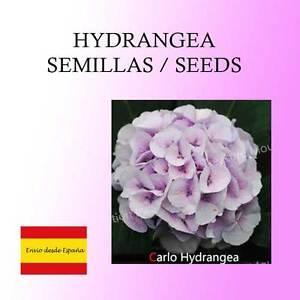 15-graines-d-039-Hortensia-carlo-Hydrangea-Viburnum-Carlo-Graines