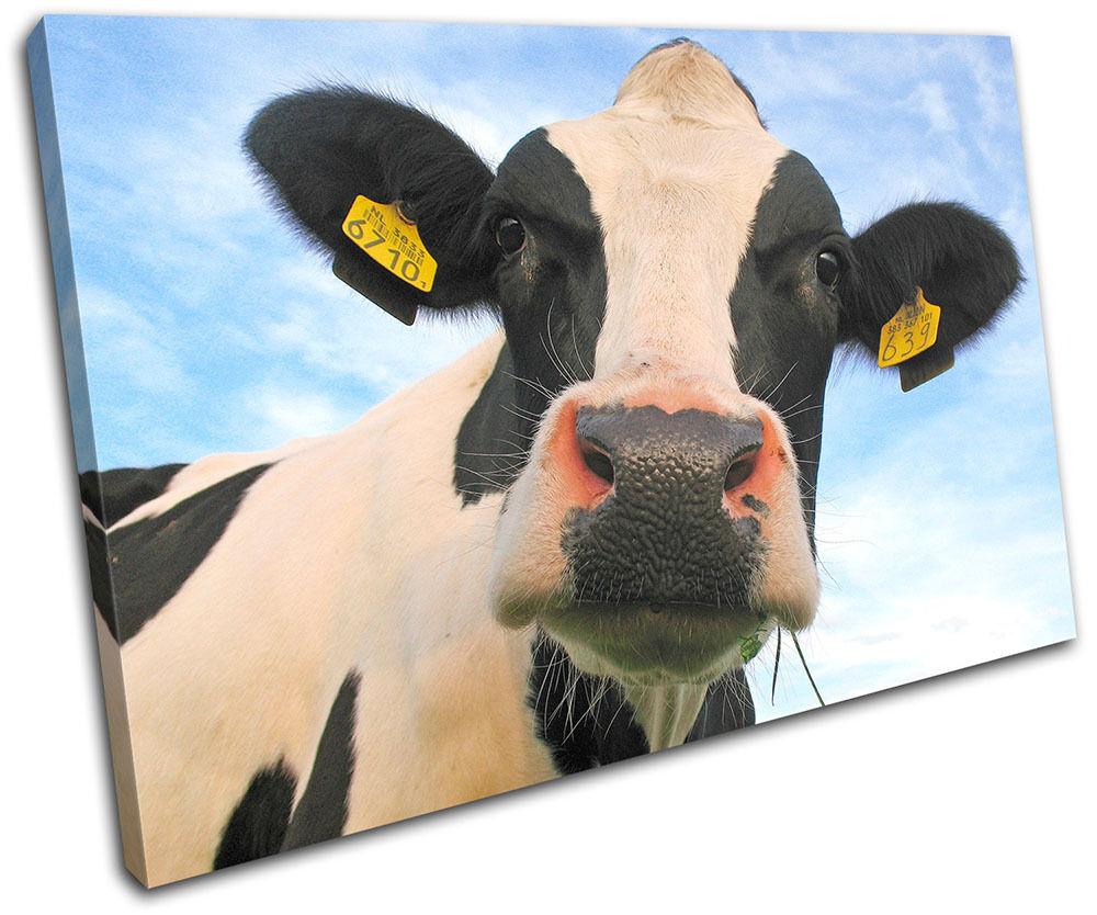 Daisy the Cow Animals SINGLE TELA parete arte foto stampa