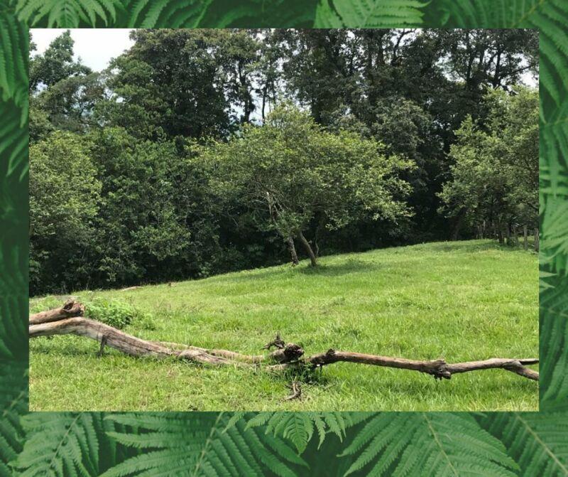 Terreno de OPORTUNIDAD Ideal para desarrollo campestre o un rancho agrícola y ganadero