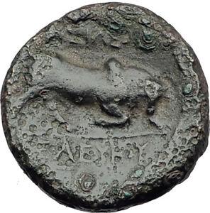 SELEUKOS-I-Nikator-312BC-Genuine-Ancient-SELEUKID-Greek-Coin-MEDUSA-BULL-i64663