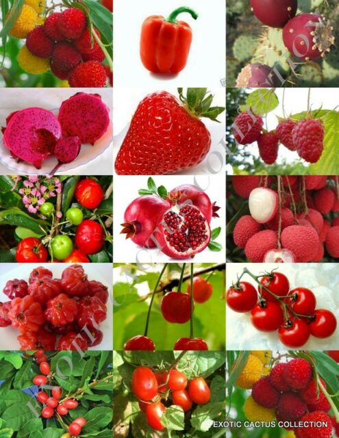 Red Fruits Mix Rare Organic Edible Colorful Fruit Healthy Heart Seed 15 Seeds