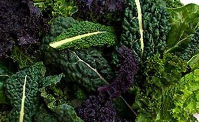 KALE 'Heirloom Mix' 150 seeds mixed kale COOL SEASON vegetable garden heritage