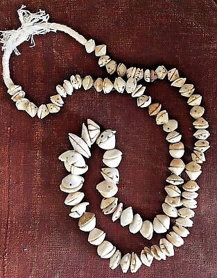 African Antique Mauritanian Conus Shell Hair Ornament Trade Beads Mauritania 1 Ebay