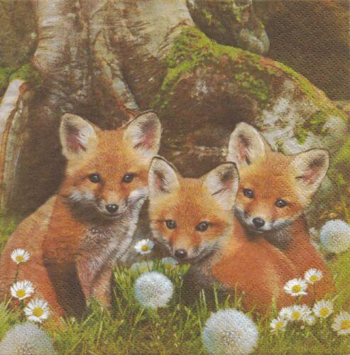 4 Lunch Servietten Little Foxes Basteln Frühling Drei Kleine Füchse am Baum