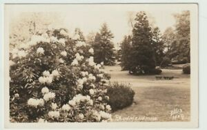 Unused-Postcard-Real-Photo-RPPC-Rhododendrons-Flowers