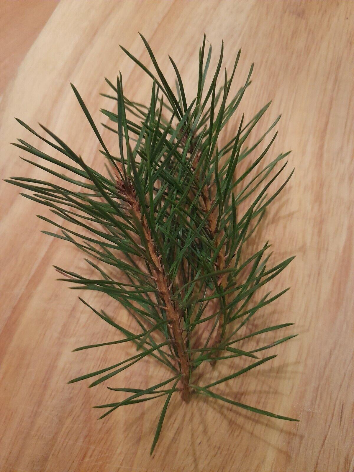 Organic Fresh Douglas Fir Pine Needles- Herbal, Soap, Scent, 100g