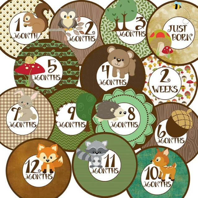 14 Woodland Forest Animals Baby Boy or Girl Unisex Monthly Milestone Stickers
