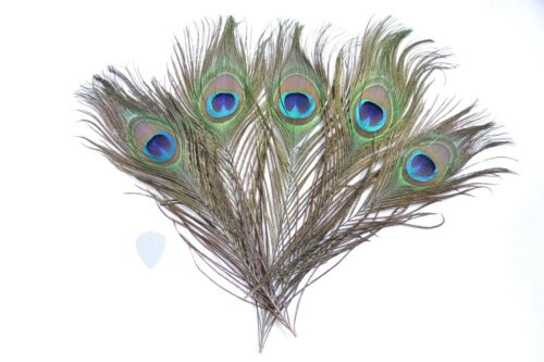 Great for craft Green Blue Eyes Natural Peacock Tail Feathers 25-30cm Long