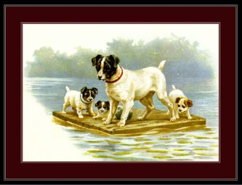 Print Jack Russell Terrier Dog Puppy Art Picture