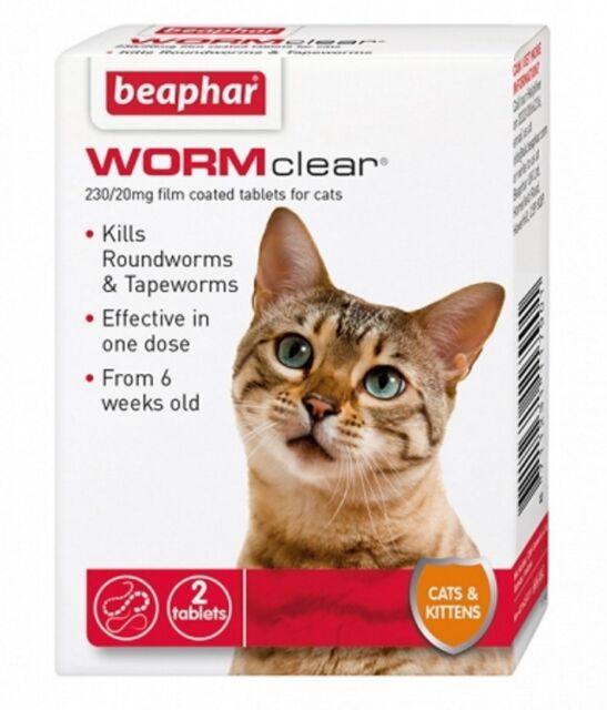 Cat Roundworms