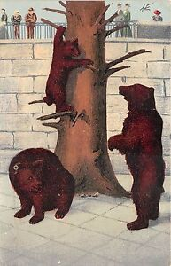 BF39399-bear-ours-bern-switzerland-animal-animaux