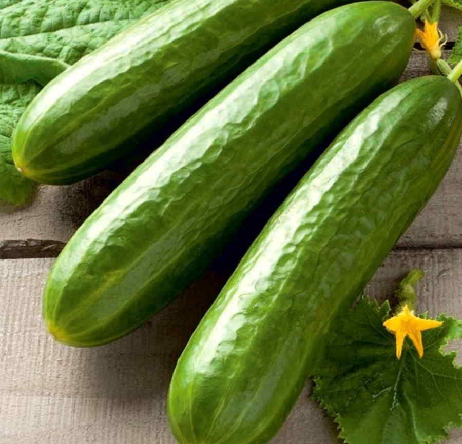 CUCUMBER DELICIOUS fast, rich crops - 20 SEEDS SOW NOW! Easy for Beginners !