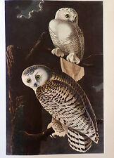 ANTIQUE 1937 AUDUBON PRINT - No. 121 SNOWY OWL - FREE SHIPPING !!