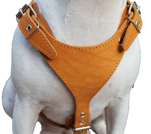 "Genuine Leather Dog Harness Medium 25/""-30/"" Chest 1/"" Wide Adjustable Straps"