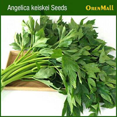 Angelica Seed Tomorrow's Leaf Ashitaba Angelica Keiskei 신선초 Au 1g About 100pcs