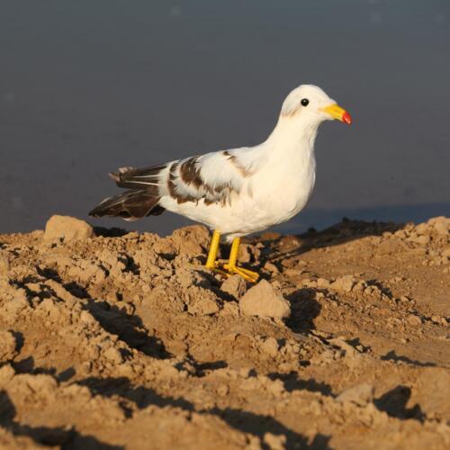 Artificial Bird Feathered Seagull Realistic Home Garden Decor Ornament #2