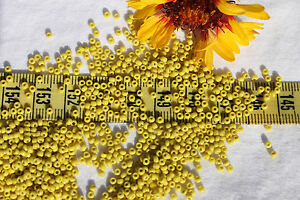 11-0-Old-Time-Vintage-Venetian-Old-Yellow-Seed-Beads-Crafts-Jewelry-Making-1oz