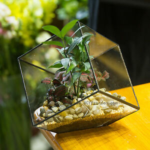 Inclined Cube Clear Glass Geometric Terrarium Planter For Succulents