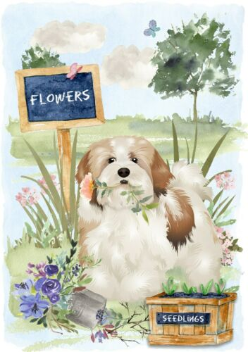 """4/"""" x 6/"""" Blank Card// Notelet Design By Starprint Lhasa Apso Dog"""