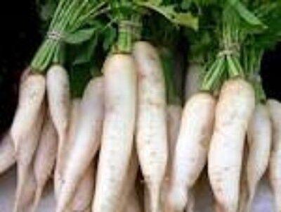 3 LBS TROPHY DAIKON FORAGE RADISH SEED FOR DEER FOOD PLOT BRASSICA DEER LOVE IT