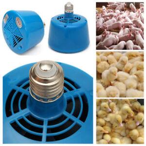 Pets Livestock Piglets Chickens Heat Warm Lamp Keep Warming Bulb 220V 100-300W