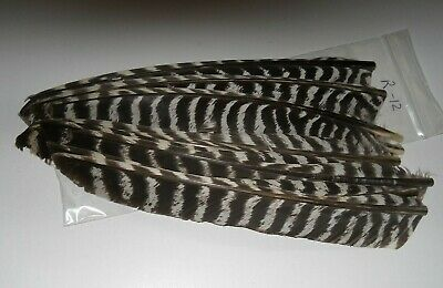 12 BARRED TURKEY WING-FLIGHT FEATHERS,FLY TYING,CRAFT,12 IN.