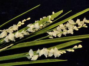 Vintage-Millinery-Flower-White-3-8-034-ea-Along-a-Stem-for-Hat-Wedding-Hair-Y55b