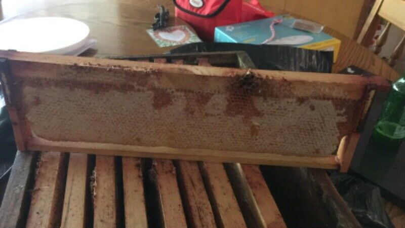 Bee hive brood and super wired and wax strip.