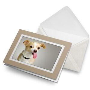Greetings-Card-Biege-Cute-Chihuahua-Puppy-Dog-Animals-8641