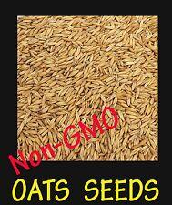 10 Lb. OAT seed - Fresh Seed - Deer Turkey Food Plot - Wildlife Food    Non-GMO