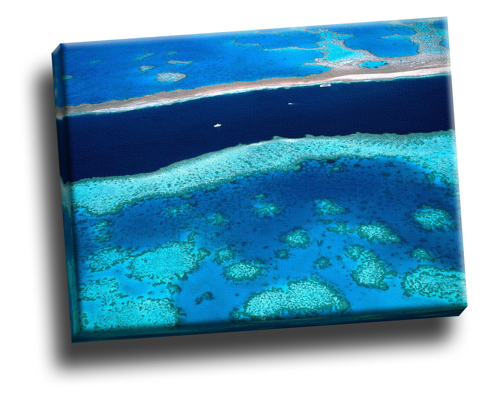 Great Barrier Reef Giclee Canvas Wildlife Picture Wall Art