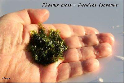 Moss and Mesh - 37 varieties of aquatic moss! (Live aquarium plants for shrimp)