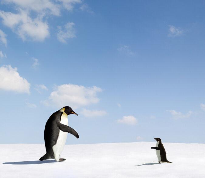 3D Größe der Pinguin 4886 Fototapeten Wandbild Fototapete BildTapete Familie DE