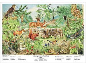 Wald-Tiere-Schuelerhilfe-Schulkarte-Lehrtafel-Schulwandkarte-Kinder-lernen-7570