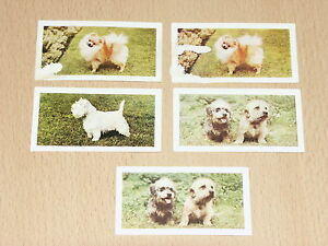 Hornimans Tea Cards DOGS - <span itemprop=availableAtOrFrom>Chelmsford, Essex, United Kingdom</span> - Hornimans Tea Cards DOGS - Chelmsford, Essex, United Kingdom
