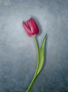 NEW-ANDREW-K-SHORT-ORIGINAL-034-Red-Tulip-034-red-Flower-FLORAL-OIL-ON-CANVAS-PAINTING