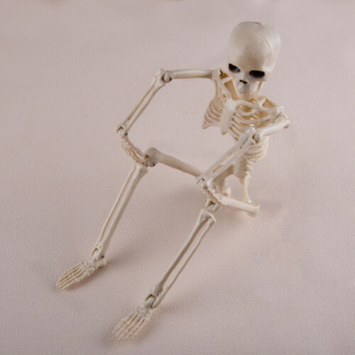 40cm Human Skeleton Bones Real Hanging Halloween Props Decoration House Corner
