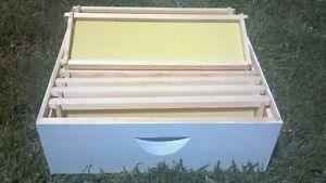 Medium-Honey-Super-Illinois-Honey-Super-Assembled-Painted-for-Bee-Hive