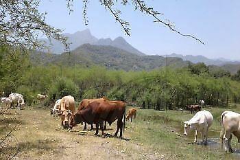 Ranchos Venta Montemorelos El Pastor