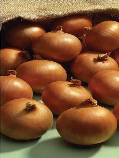 Vegetable - Onion - Ailsa Craig - 1200 Seeds