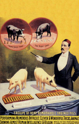 CIRCUS TRAINED PIG MUSIC BELLS CARD TRICKS SHOW SMART VINTAGE POSTER REPRO