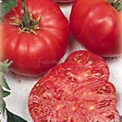 100 Heirloom Beefsteak Tomato Vegetable Seeds Delicious TT211