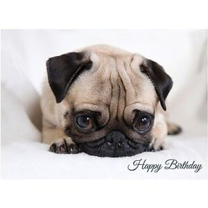 Image Is Loading Shy Pug Puppy Premium Birthday Greeting Card Dog
